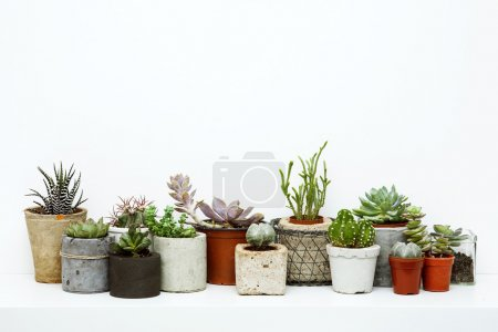 Flowers and succulents. Scandinavian hipster room interior