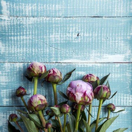 Photo pour Pivoines roses fleurs sur vintage peint table en bois bleu . - image libre de droit