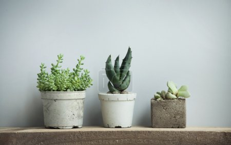 Close up of tiny succulents in diy concrete pots in scandinavian
