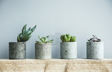 Photo pour Succulent plants in DIY concrete pots as a Scandinavian-style room interior decoration - image libre de droit