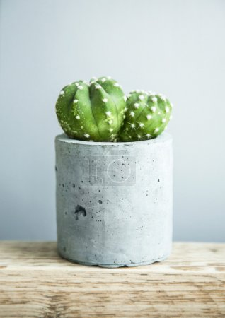 Photo for Succulent plant in DIY concrete pot as a Scandinavian-style room interior decoration - Royalty Free Image