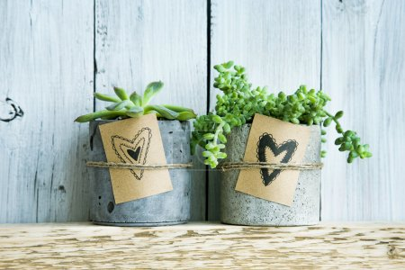 Two succulents in concrete pot and Gift tag with hand drawn hearts.