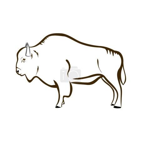 Illustration pour Illustration vectorielle : Bison sur fond blanc . - image libre de droit