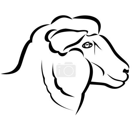 Illustration pour Illustration vectorielle : Tête de mouton sur fond blanc . - image libre de droit