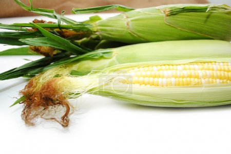 Photo for Fresh Picked Corn on the Cob - Royalty Free Image