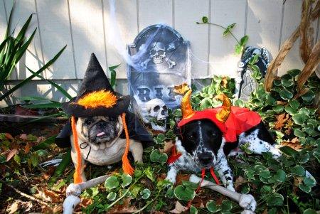 Halloween Caught Digging Up the Bones