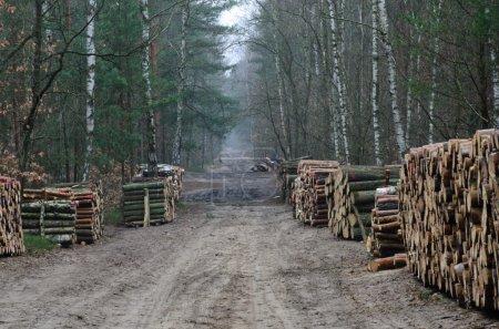 Photo pour Route de campagne en forêt avec des piles de bois coupé - image libre de droit