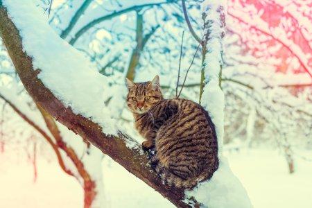 cat on the snowy tree