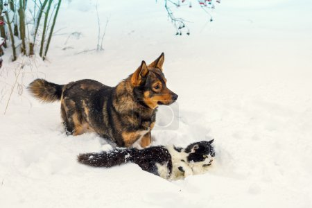 dog and cat playing in snow