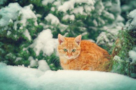 Kitten in snow