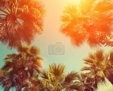 Frame with tropic palm trees
