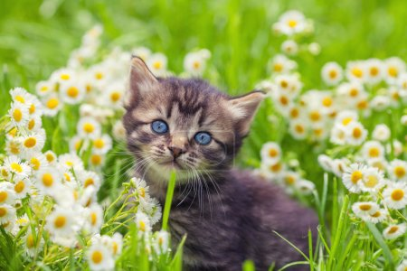 Kitten on flower lawn