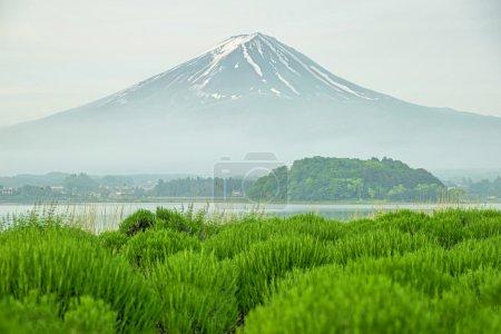 Mt fuji in morning at kawaguchi, Japan