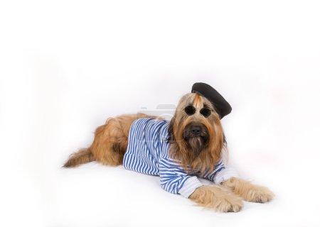 Big French shepherd dog in black beret and dark glasses