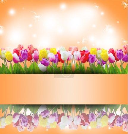 Photo pour Fond de fleurs de tulipe vintage avec cadre de timbre pour les félicitations et la carte d'invitation - image libre de droit