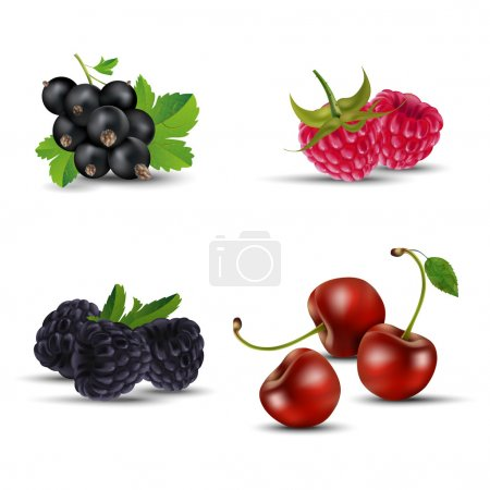Set of fruits - blackcurrant, raspberry, blackberry and cherry