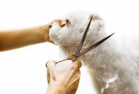 Little Dog Grooming