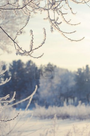winter landscape of snow-covered fields, trees