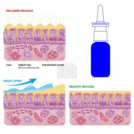 Nasal mucosa cells and micro cilia vector scheme
