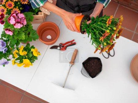 Photo pour Jeune femme jardinage à la maison plantation de fleurs dans des pots - image libre de droit