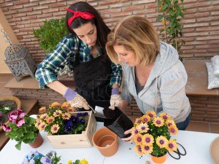Photo pour Belles jeunes femmes matures jardinage à la maison plantation de fleurs dans des pots - image libre de droit