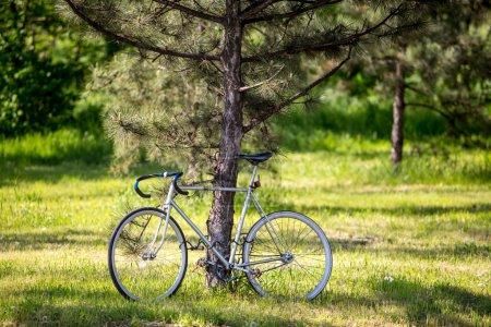 old vintage bike in sunny park