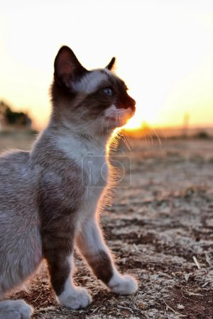 small cat in the field