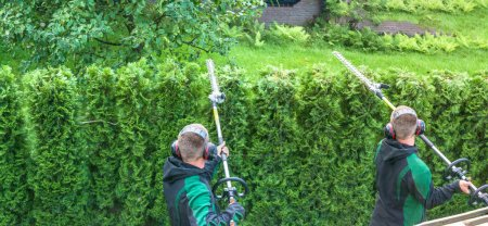 Panoramic image from cutting a hedge