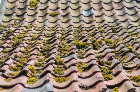 Old roof tiles, green education, roofs