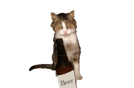 Cat, drinking, beer, bottle