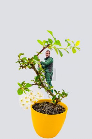 Man bonsai tree