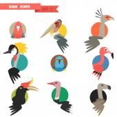 Exotic tropical bird set with flat design