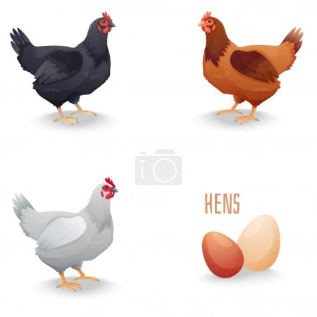 Set of hens different breed with eggs. isolated