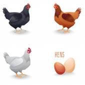 Set of hens different breed with eggs isolated