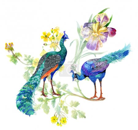Watercolor peacocks and iris flowers