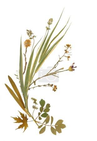 Dry herbarium plants