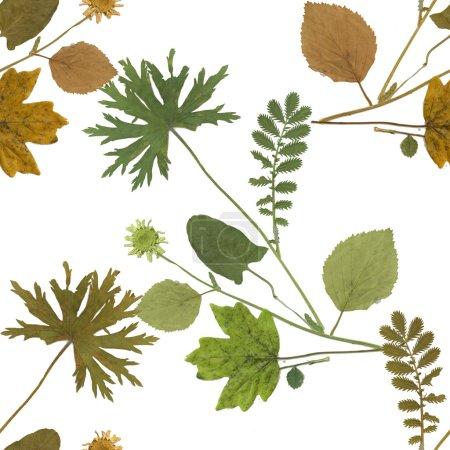 Herbarium plants background