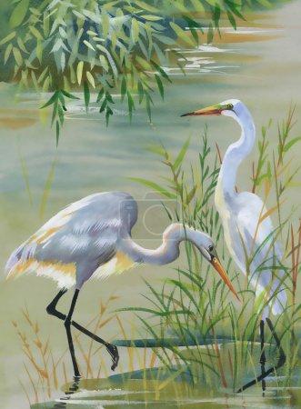Photo pour Héron oiseaux aquarelle illustration - image libre de droit