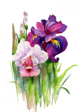 Illustration for Watercolor blooming iris flowers vector illustration - Royalty Free Image