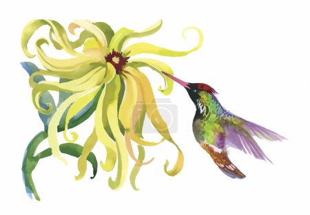 Watercolor wild exotic birds on flowers