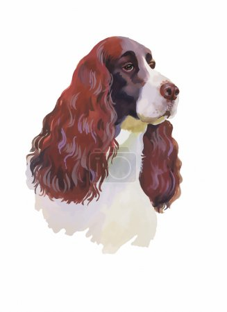 English cocker spaniel Animal dog watercolor illustration isolated on white background vector