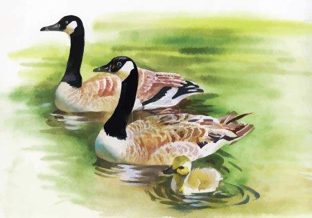 Three Ducks with black Necks.  Watercolor painting of three gray ducks with black necks swimming in a pond