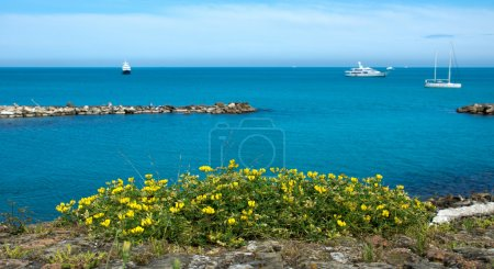 Antibes - Flowers over Mediterranean Sea