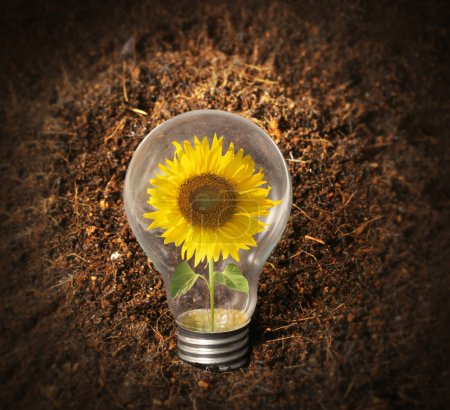 Photo for Sunflower with inside Light Bulb - Royalty Free Image