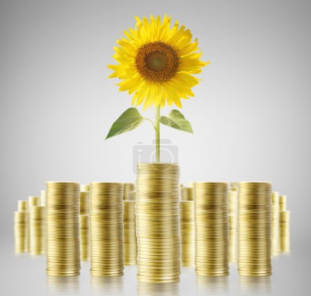 Sunflower and coins money growth