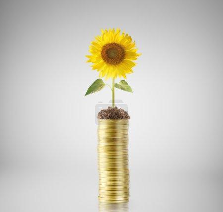 Photo pour Concept d'investissement, pièces graphique marché boursier - image libre de droit