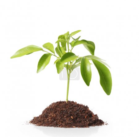 Photo for Green  plant, sprout growing from - Royalty Free Image