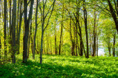 Summer forest landscape in sunny weather - forest trees and narrow path lit by soft sunlight. Forest nature in sunny day