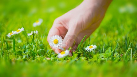 Picking flowers in nature