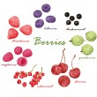 Постер, плакат: Set of colored hand draw graphic berries